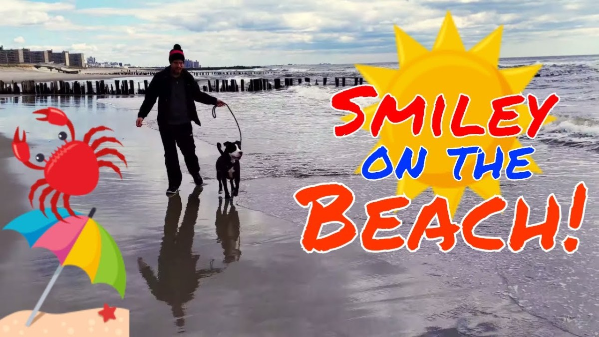 Smiley the Beach Dog: Rockaway Beach NYC (YouTube)