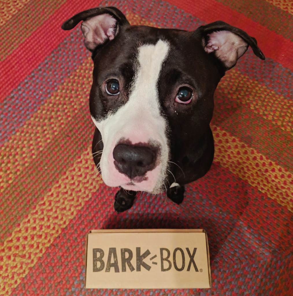BarkBox, BarkBox Subscription: Dog Toy Review, The Travel Bug Bite