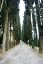 Cypress lined pathway at Door Detail at Badia a Passignano