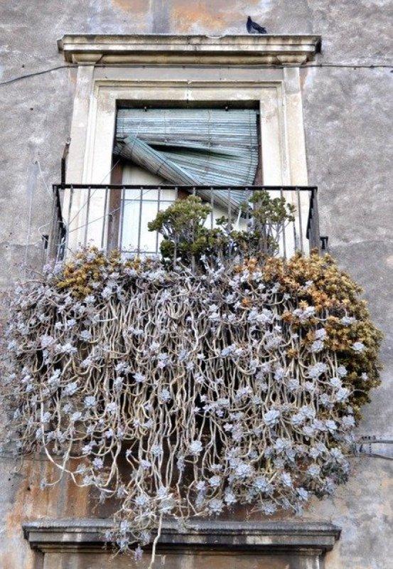 Cacti Balcony, Catania
