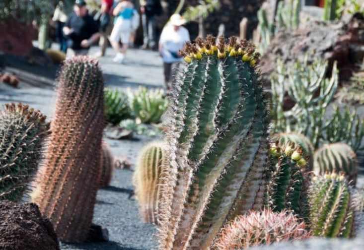 Top 5 sights to see in lanzarote for Jardin de cactus lanzarote