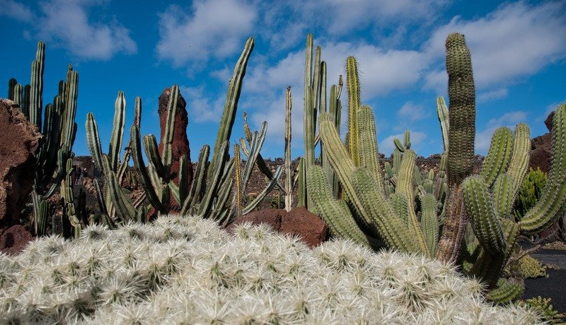 Top 5 sights to see in lanzarote for Jardin de cactus lanzarote