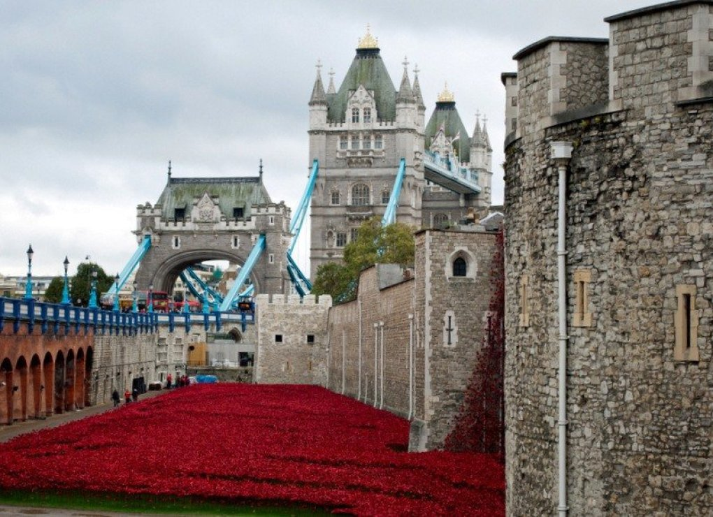 Tower lf London Poppies and Tower Bridge