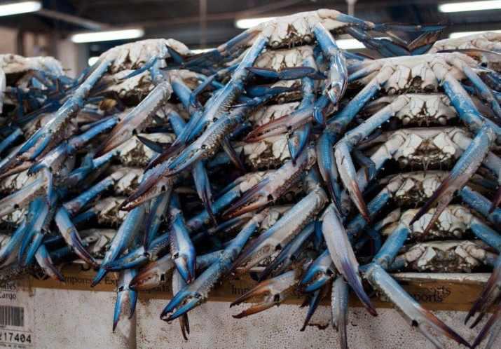 blue-crab-deira-fish-souk