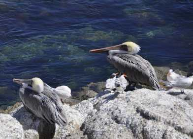 Discovering wildlife in Monterey Bay, California