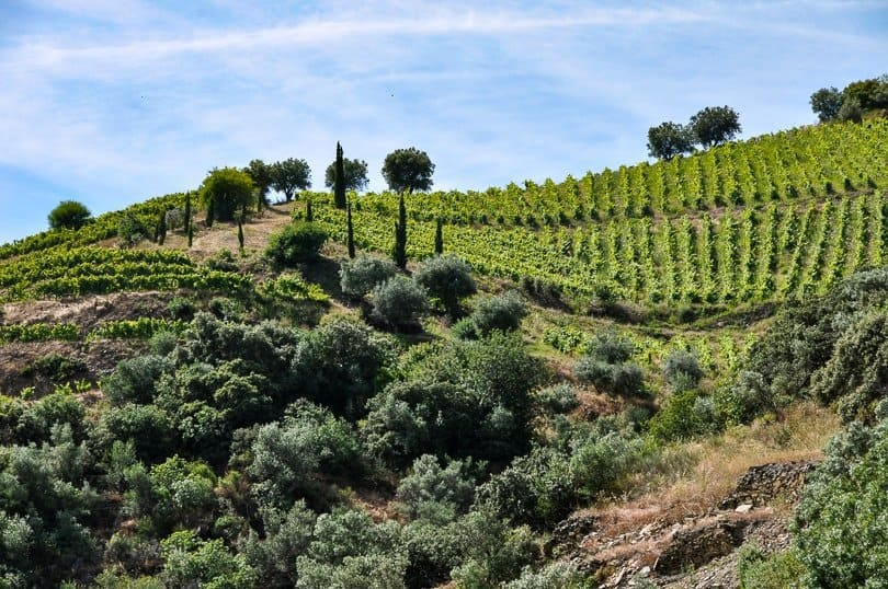 douro-valley-vine-terrace