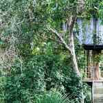 A Treehouse Stay in the Amazon Jungle
