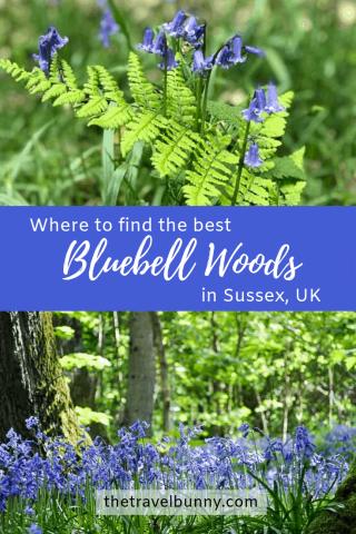 Bluebells Sussex