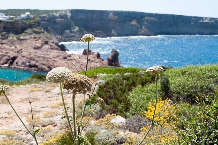 Menorca spring flowers