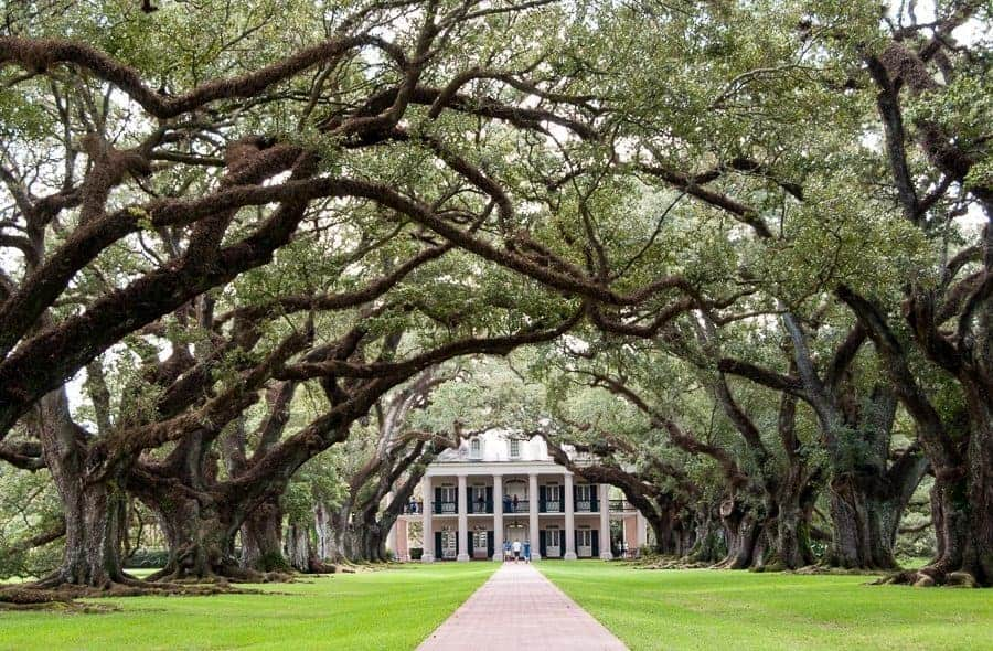 Oak Alley Plantation House Oak Trees