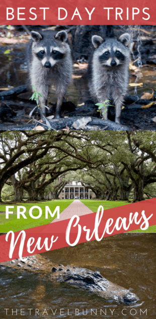 Two fabulous New Orleans day trips. Firstly, take a New Orleans plantation tour, offering history, romance and architecture before foraying into eco-territory with a Cajun swamp tour and wildlife spotting. You'll still be back in New Orleans with time to enjoy a night out in NOLA.