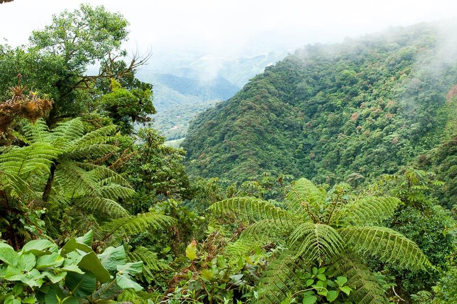Monteverde Cloud Forest Costa Rica