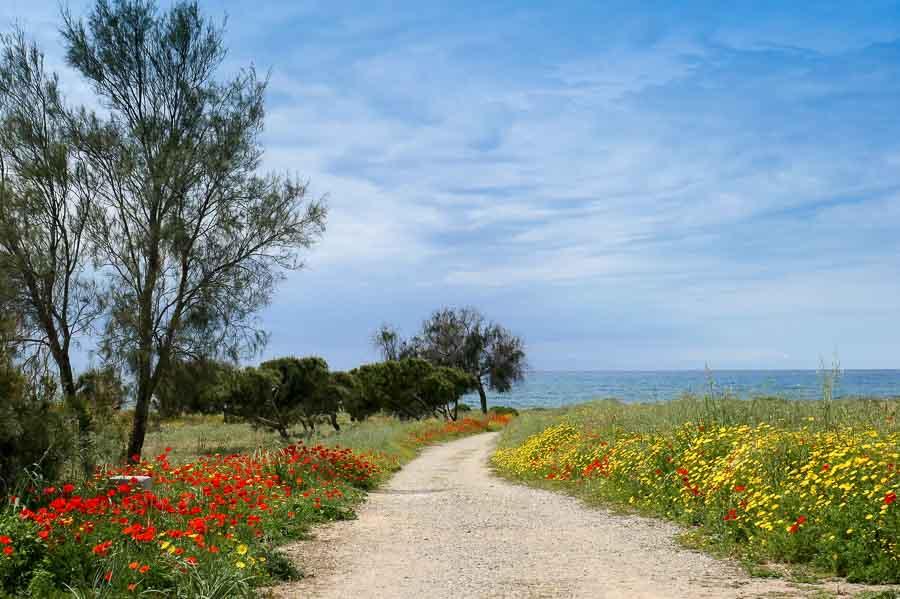 Spring Flowers, Paphos Cyprus