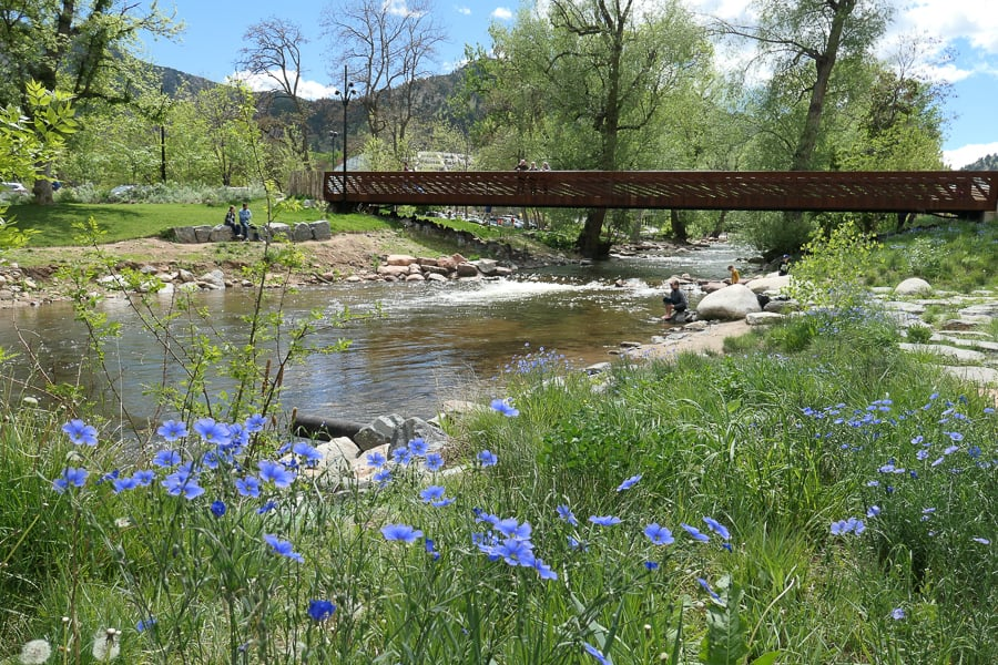 Boulder Creek with bridge and blue flowers in foreground