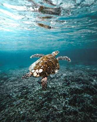 Scuba-diving-and-snorkeling-in-Raja-Ampat