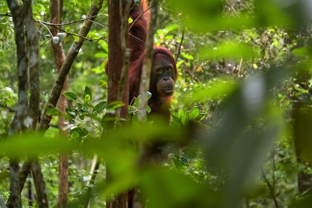 animals-of-indonesia-list