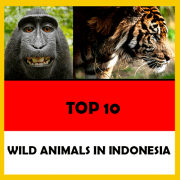 【 🦁 】 10 wild & native Animals that live in Indonesia «