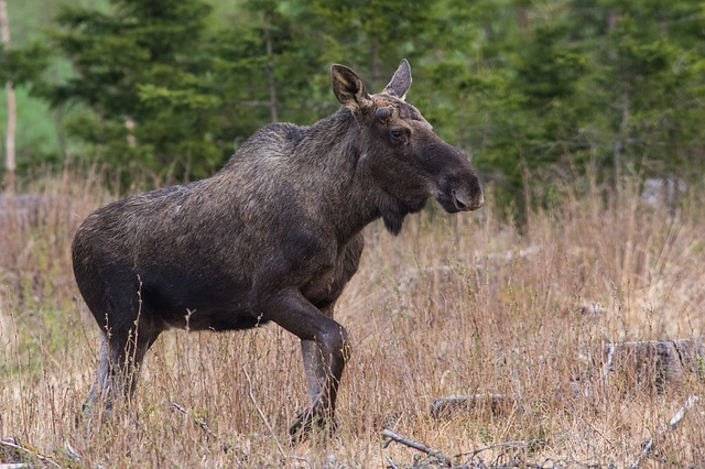 norway-wildlife-tours