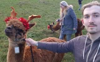 Reinpacas at the Charnwood Forest Alpacas