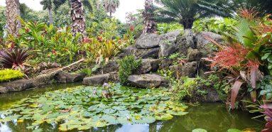 Dole Garden