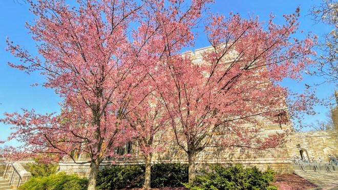 Spring at Princeton University