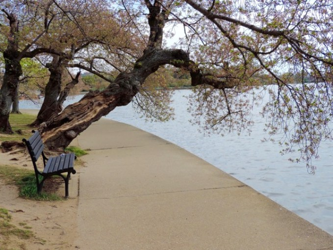 A lone bench along the Tidal Basin