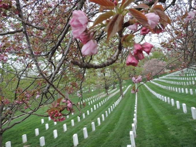 Arlington Cemetery