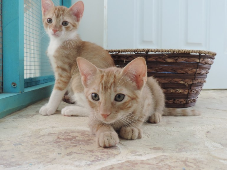 Kittens awaiting their forever home