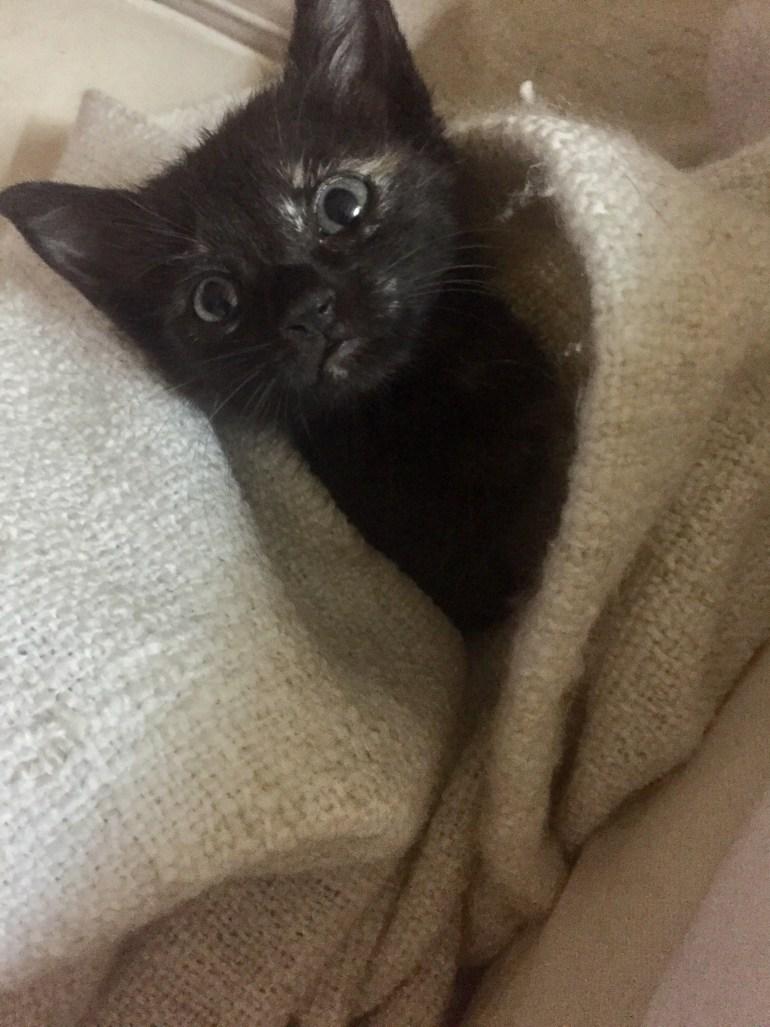 Miep the island kitten