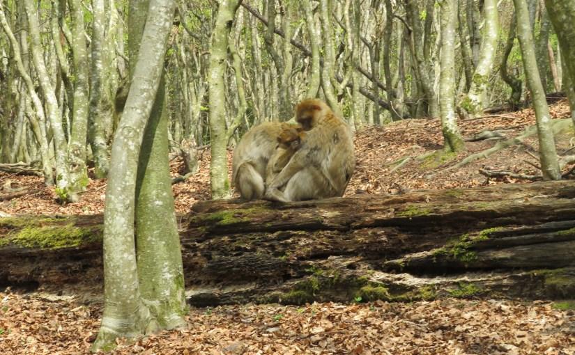 I found my thrill at Monkey Hill– Affenberg Salem