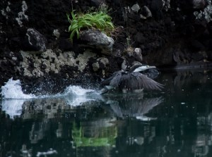 2016 04 08 Sail Day 10 Dinghy Wairakau Stream-15