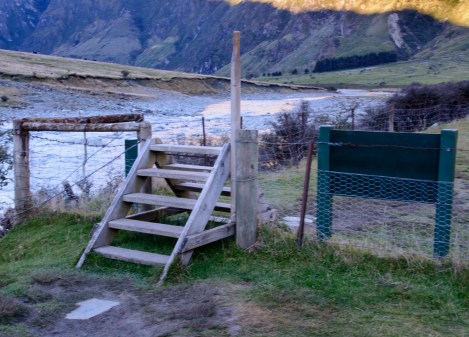 2016 04 28 Sheep and Cows Mt Aspiring Park (115)