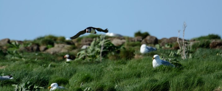 puffins-and-root-cellars-18-of-32
