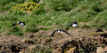 puffins-and-root-cellars-19-of-32