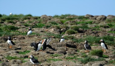 puffins-and-root-cellars-25-of-32