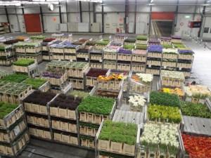 Gigantic flower market - Aalsmeer, Netherlands