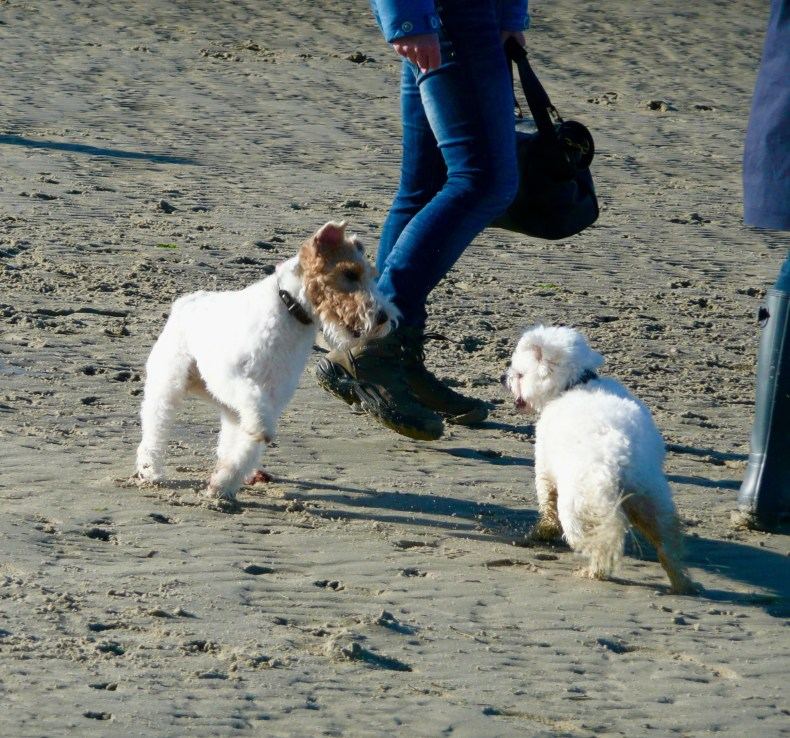 Some dogs enjoying the beach in the north - Germany