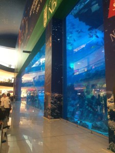 There is a full-sized aquarium inside of the mall! - Dubai, UAE