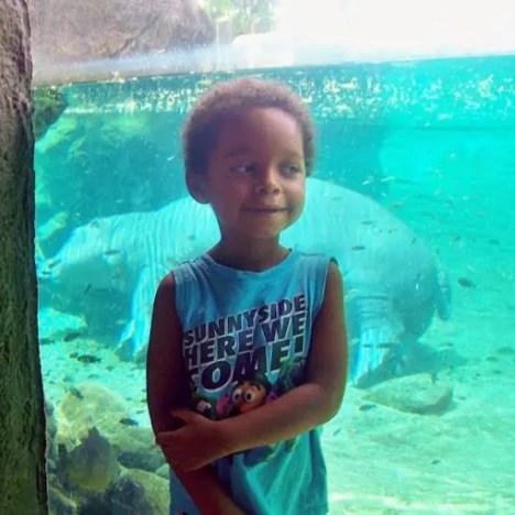 Hippo, Busch Gardens Tampa Bay