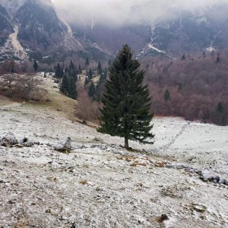 Sentiero Dei Grandi Alberi, Vicenza Province, Veneto, Italy