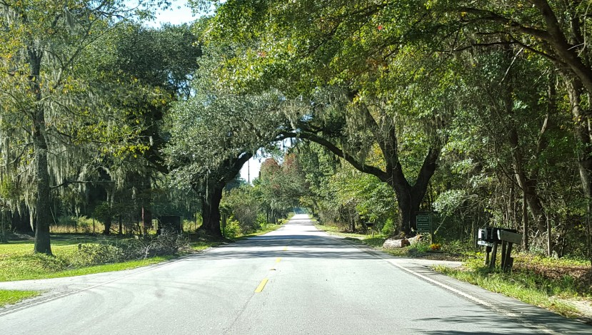 Live oak trees creating a tunnel on a South Carolina road