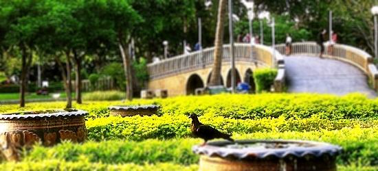 Chatuchak Park: A Nature Retreat in Bangkok