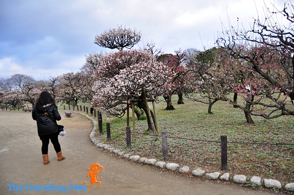 plum grove garden osaka
