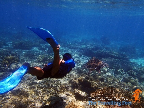 chasing sea turtles at Apo Island