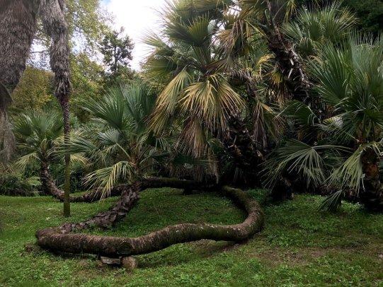 Palma dell'Orto Botanico di Roma