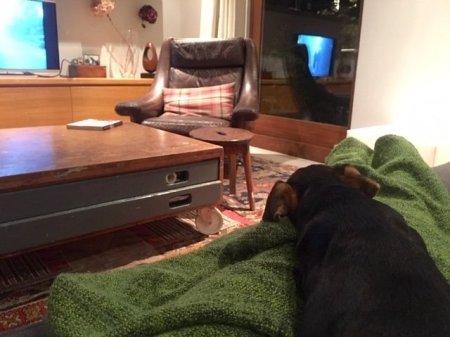 Con Betsy a guardare la tv