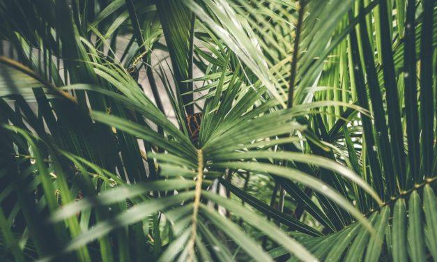 Un'oasi di pace a Roma: l'Orto Botanico
