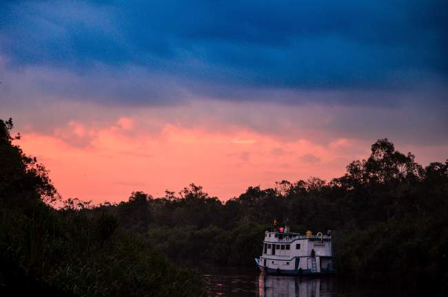 Pink sunset with Orangutan Applause in Tanjung Puting national park, Borneo, Indonesia