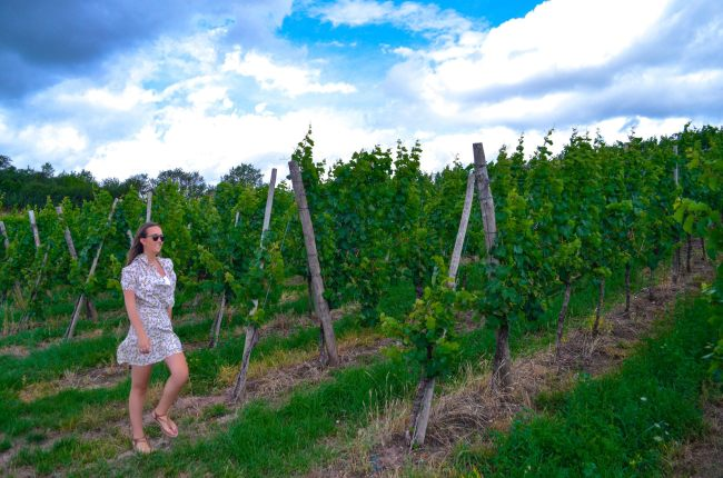 Luxembourg road trip - Vineyard viewpoint in Remich, Luxembourg