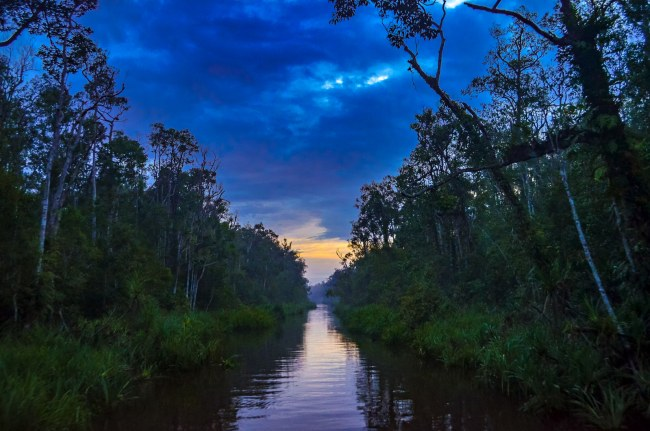Visiting orangutans in Borneo, Indonesia - cruising down the river at sunset in Tanjung Puting